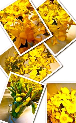 Daffodils%20collage%202010.jpg