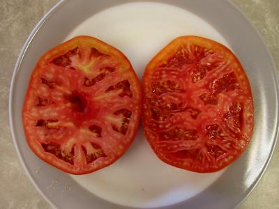 tomatoes%20May%2006.jpg