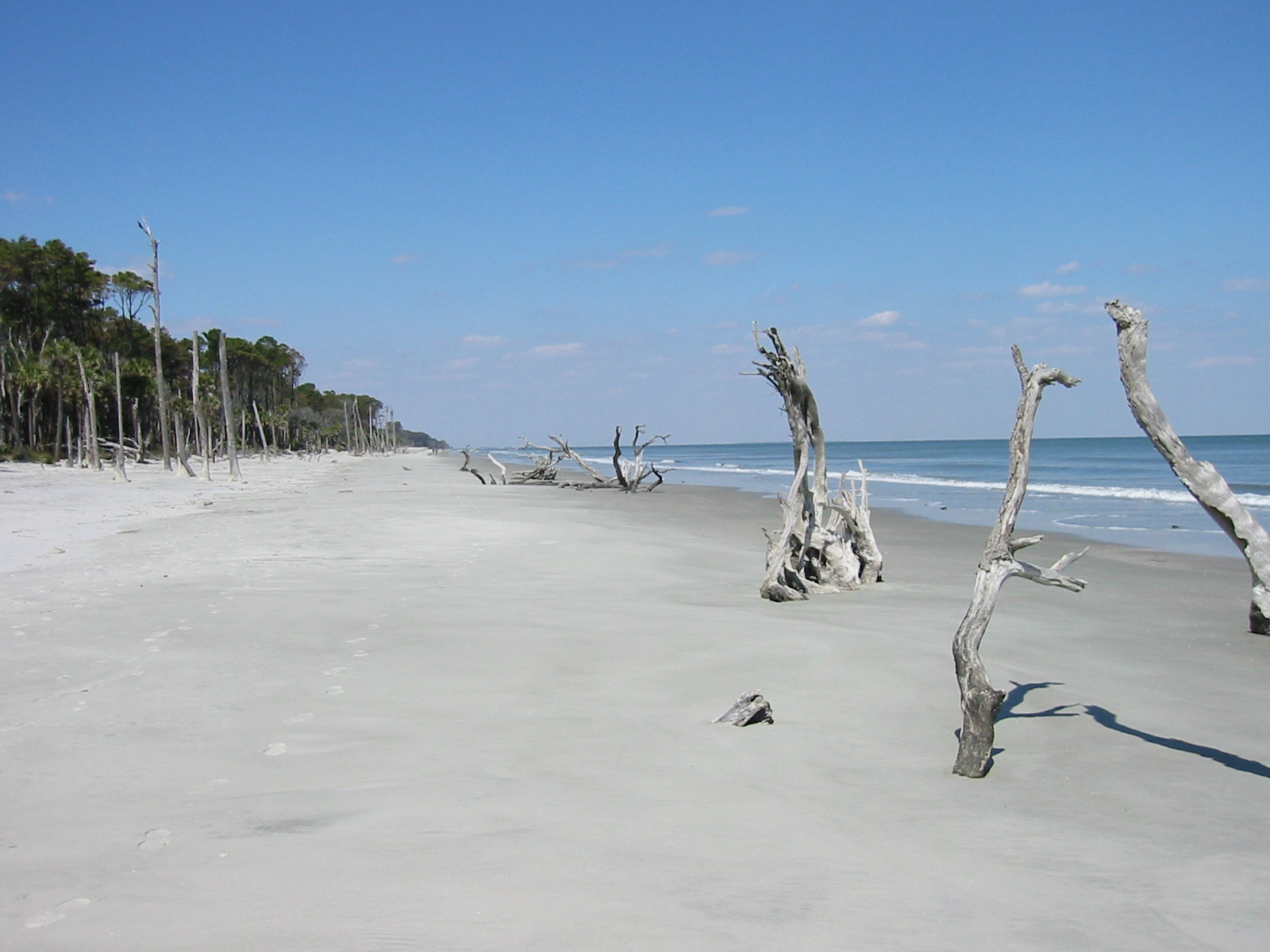 beach%20with%20tree%20stumps.JPG